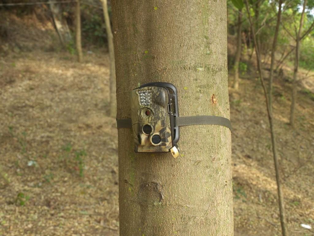 Fotopułapka firmy Acorn zamontowana na drzewie