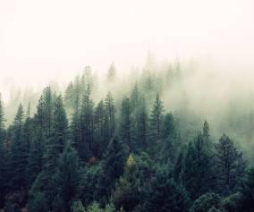 Kradzieże drewna z lasów