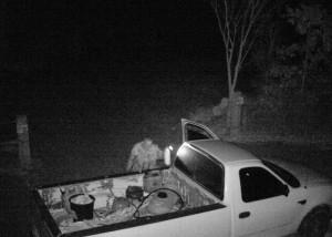 Uchwycone przez kamerę leśną złodziej narzędzi z budowy.