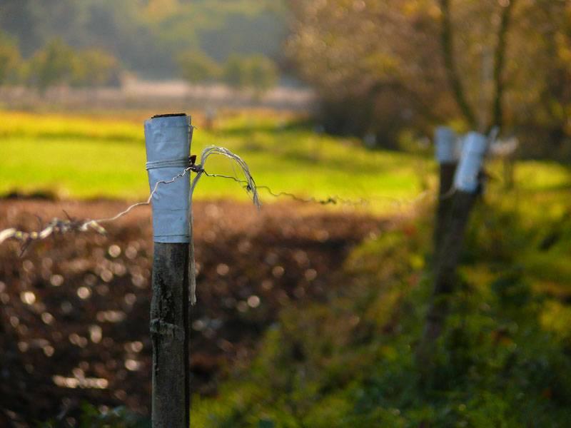 przykład elektrycznego pastucha chroniącego pole przed zniszczeniem
