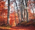 Polski las, drugim domem myśliwego