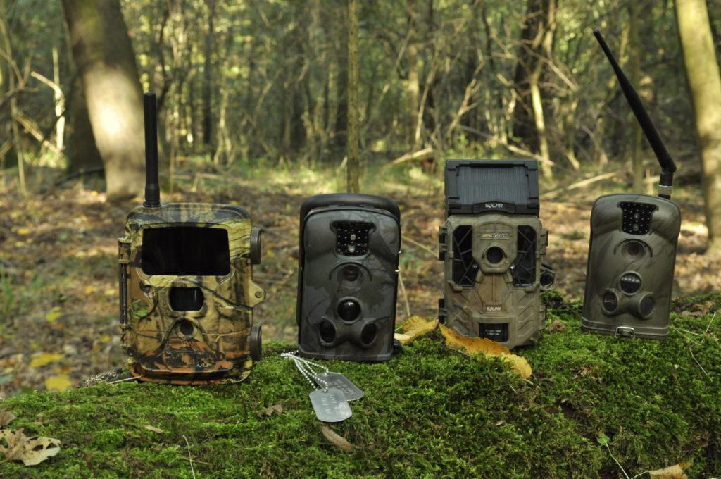 Ochrona pasieki stanie się łatwiejsza z fotopułapką