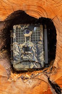 Fotopułapki GSM i Bez GSM