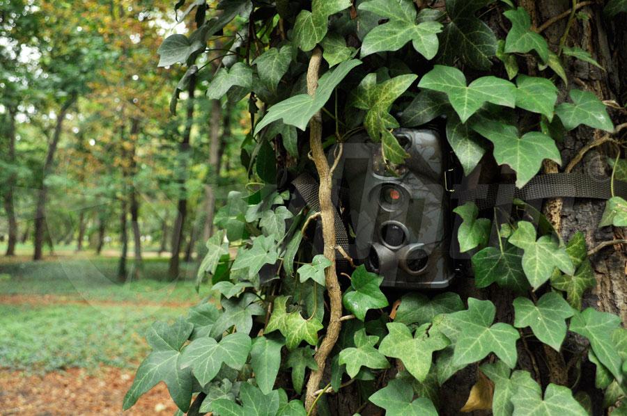 Fotopułapka TV-5220M LTL Acorn do monitoringu lasu