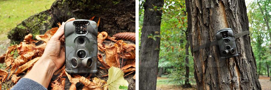 Fotopułapka firmy LTL Acorn do monitoringu lasu