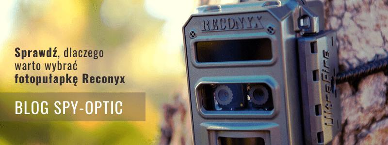 Fotopułapka Reconyx - dlaczego warto?