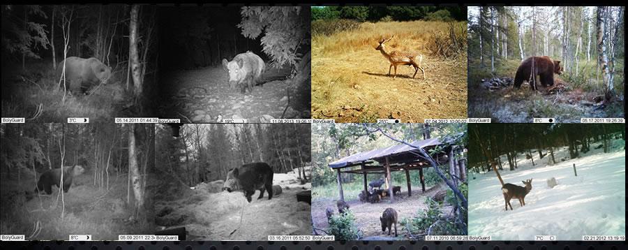 Fotopułapka leśna SG570 do monitorowania lasu