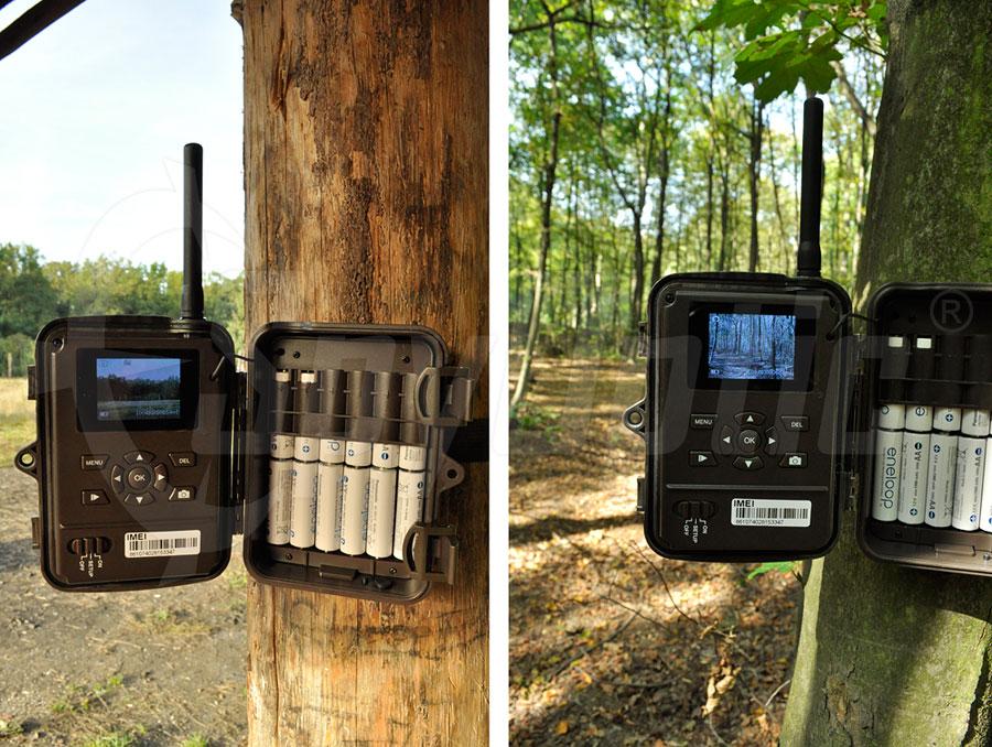 Akumulatory AA Eneloop są idealną formą zasilania fotopułapek