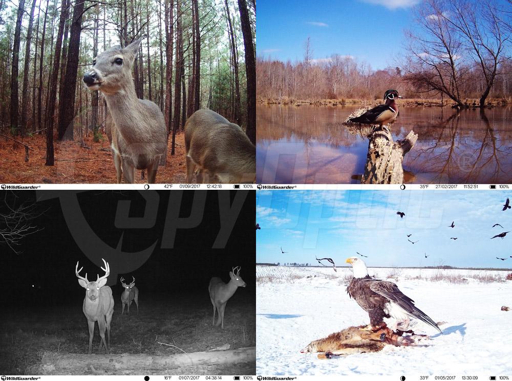 Zdjęcia z fotopułapki Wildguarder Watcher 4G